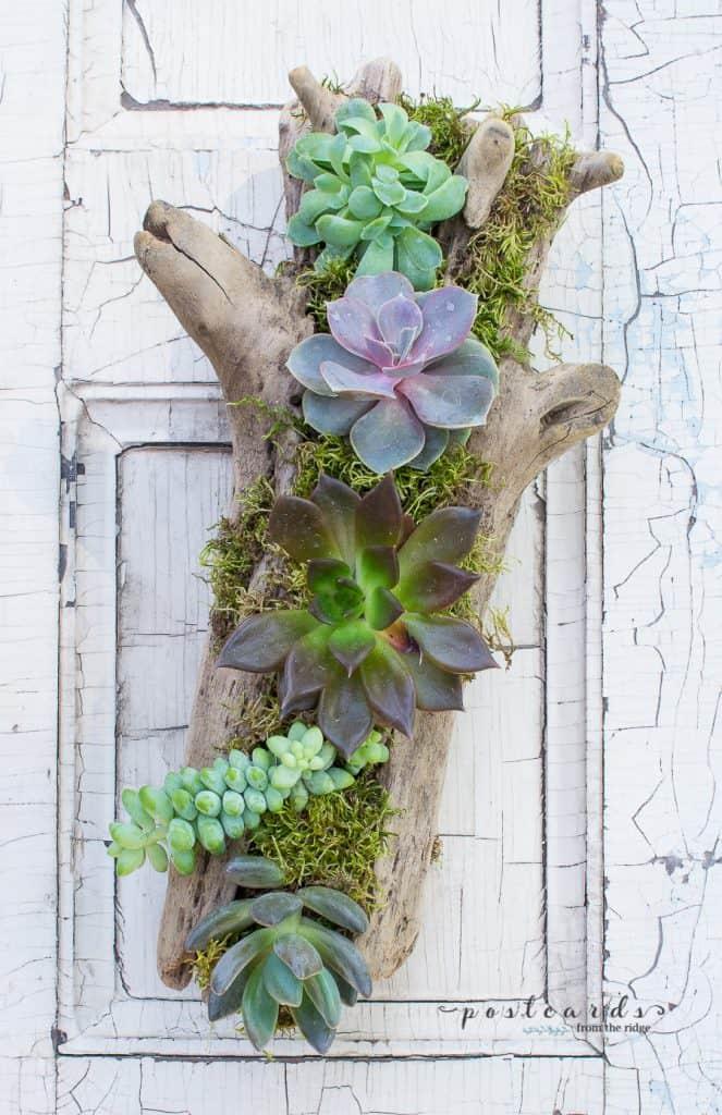 14-Driftwood-Succulent-Planter-663x1024
