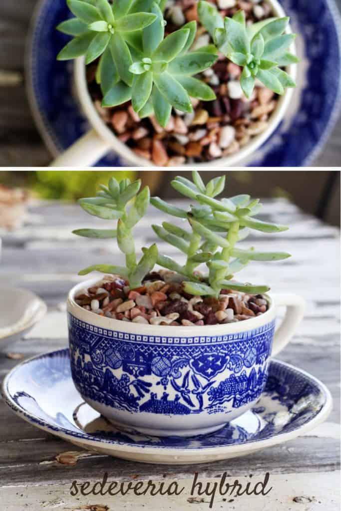 17-Tea-Cup-Planter-683x1024