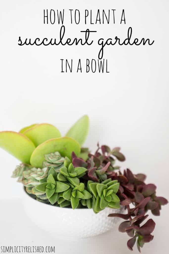 3-Bowl-Planter-683x1024