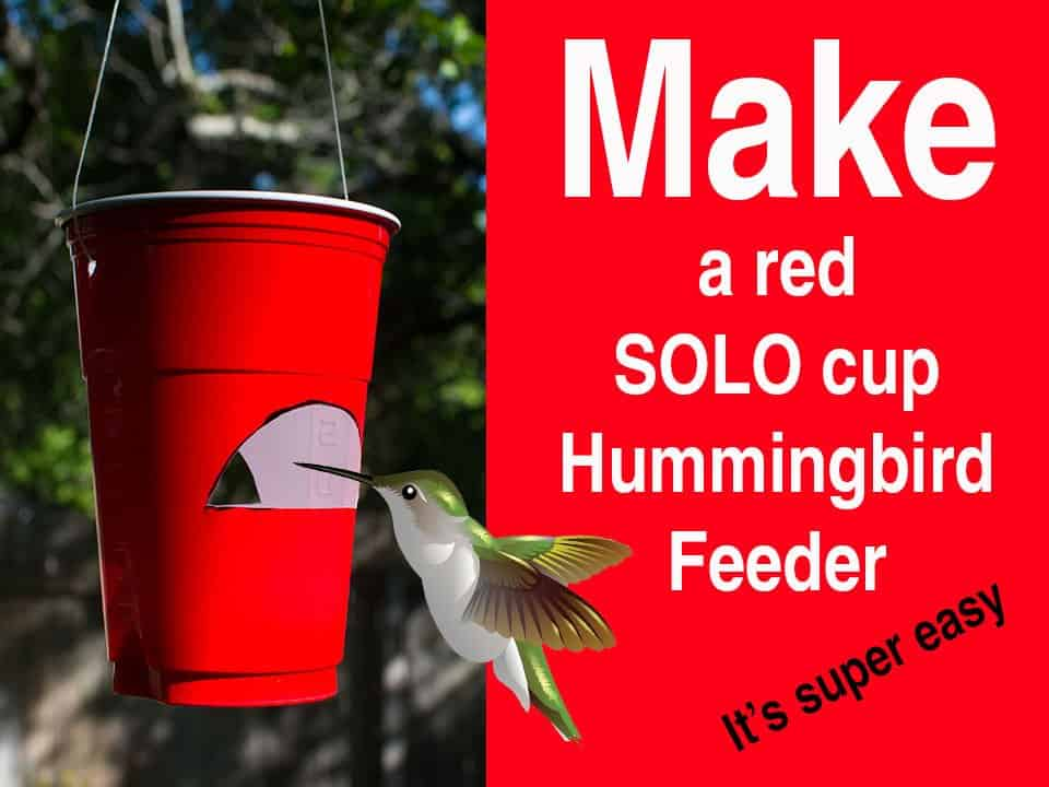 Red Solo Cup Feeder