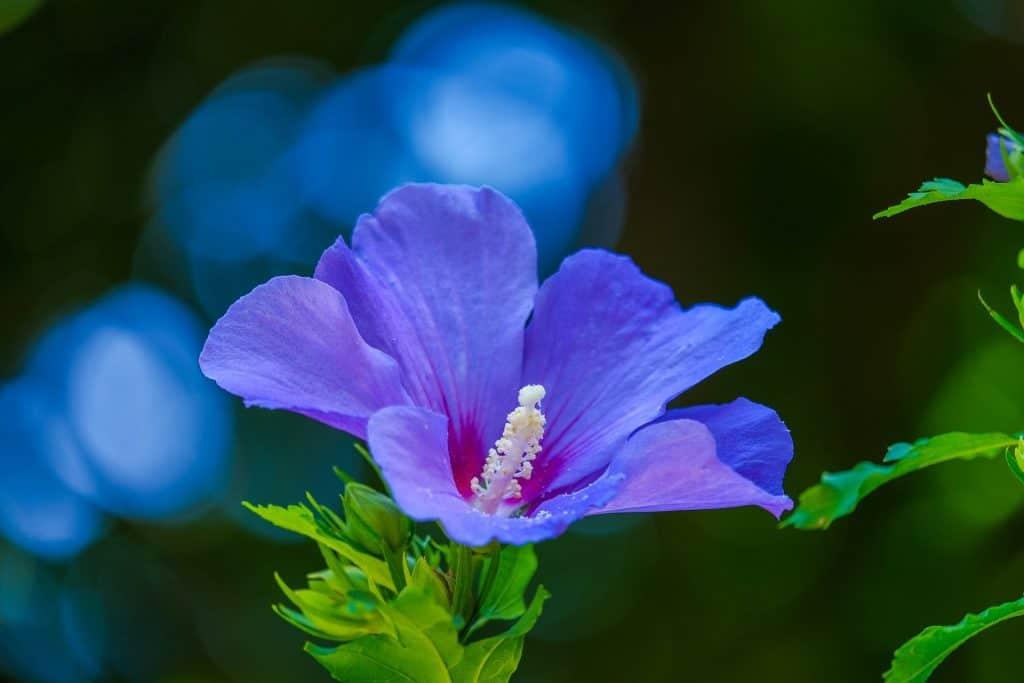 Lavender Silk Leave-In