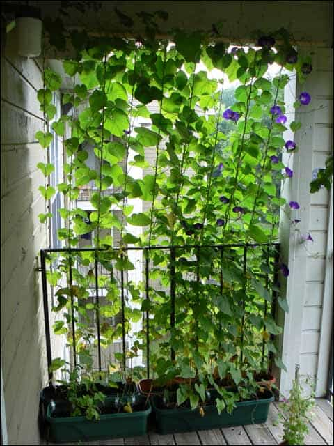 Go Green with Some Vines