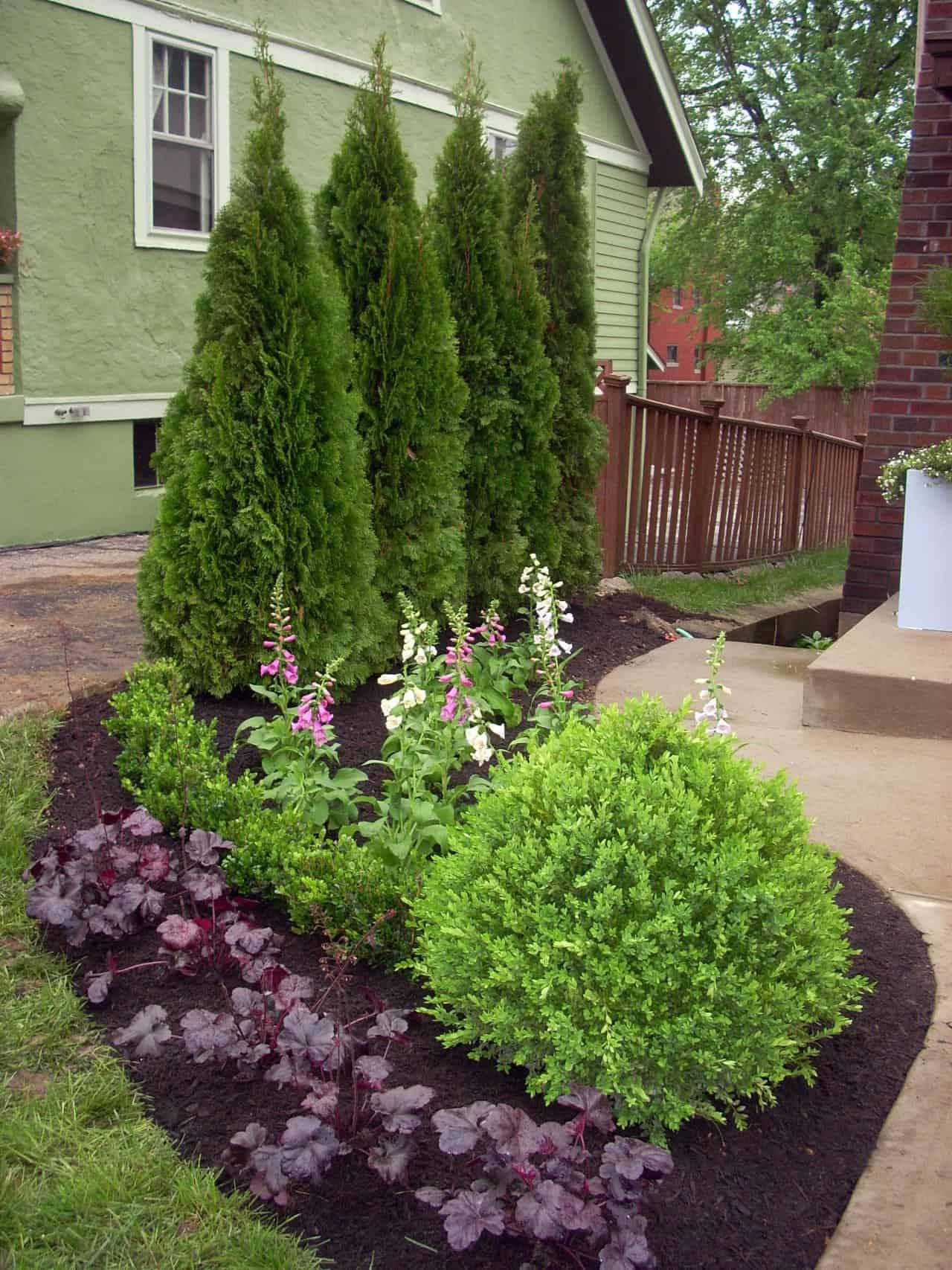 Plant an Evergreen Wall