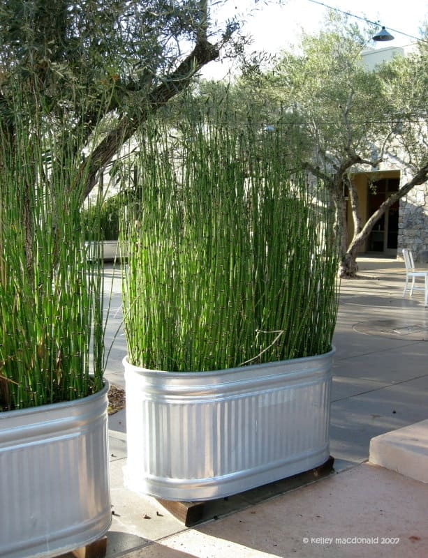 Grow A Living Bamboo Wall