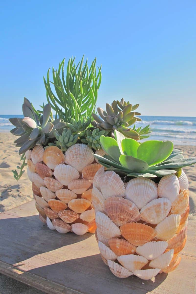 Simple Shell Planter